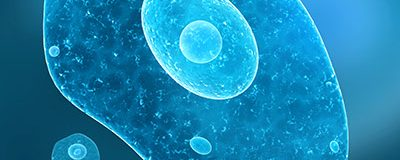 single_cell_sized